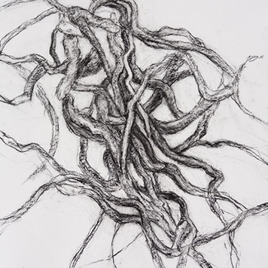 Entangled #2 - charcoal on paper, 22 in x 30 in