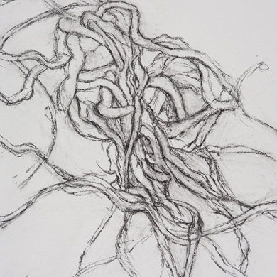 Entangled #3 - charcoal on paper, 22 in x 30 in